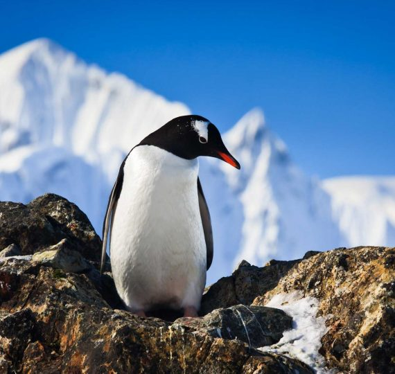 penguin-on-the-rocks-P9BZE6G.jpg